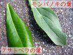 クサトベラとモンパノキの葉の違い